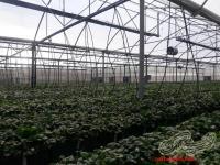 گرماتاب لوله ای گلخانه ای