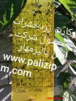 کارت زردوآبی ومشکی ورول زرد آبی حشرات محصول شرکت ایمن پالیزمهار